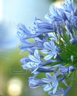 花のクローズアップの写真・画像素材[3075125]