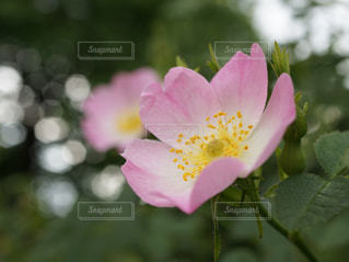 花のクローズアップの写真・画像素材[3075124]