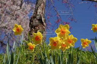 植物の色とりどりの花の写真・画像素材[3089751]