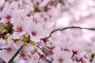 植物の上のピンクの花の写真・画像素材[3089750]