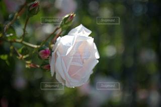 花のクローズアップの写真・画像素材[3089768]