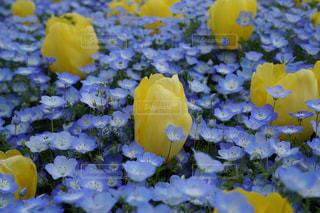 黄色い花のクローズアップの写真・画像素材[3111752]
