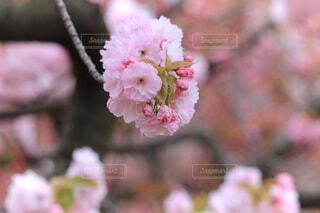 花のクローズアップの写真・画像素材[4036897]