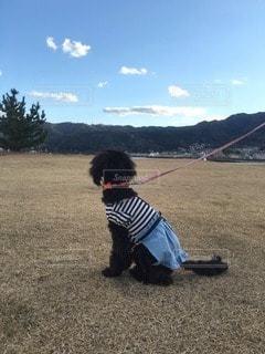 犬の写真・画像素材[116809]