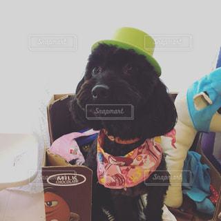 帽子をかぶった犬 - No.787645