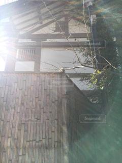鎌倉に住むリスの写真・画像素材[980488]