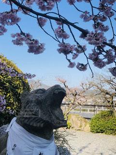 桜をパクリの写真・画像素材[3022581]