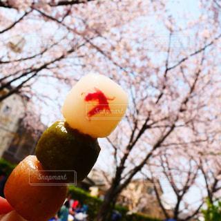 お花見にて@武庫川の写真・画像素材[3030158]