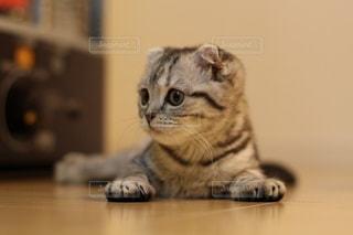子猫の写真・画像素材[3030740]