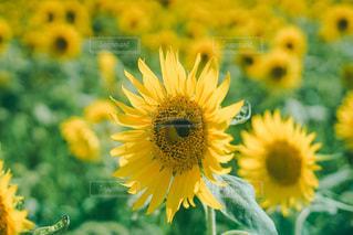 花のクローズアップの写真・画像素材[3580795]