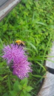 植物の上のピンクの花の写真・画像素材[3026584]