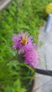 植物の上のピンクの花の写真・画像素材[3026581]