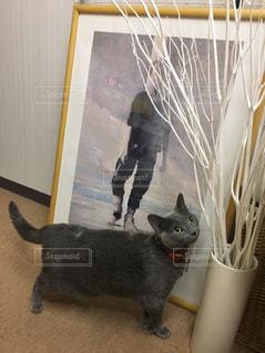 猫の写真・画像素材[265735]