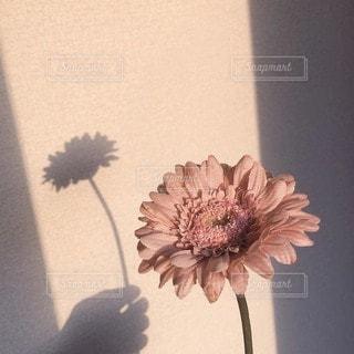 テーブルの上に花の花瓶の写真・画像素材[3026916]