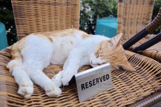 予約待ちの猫の写真・画像素材[3032405]