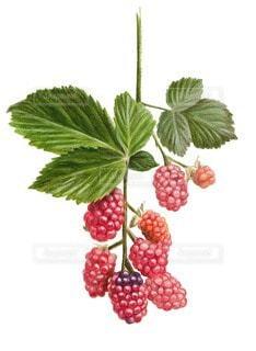 果物の写真・画像素材[117410]
