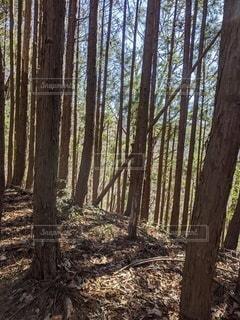 森の真ん中に座っている木製のベンチの写真・画像素材[3108696]