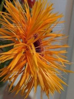 花のクローズアップの写真・画像素材[3217788]