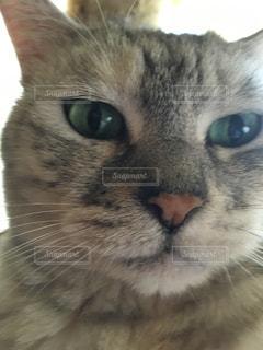 猫の写真・画像素材[143326]