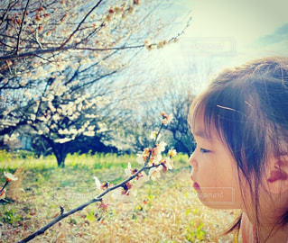 少女と梅の花の写真・画像素材[3035668]