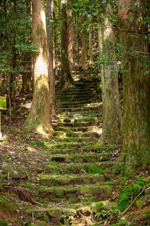 熊野古道の写真・画像素材[3120995]
