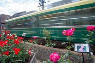 ピンクの花の電車の写真・画像素材[3156080]