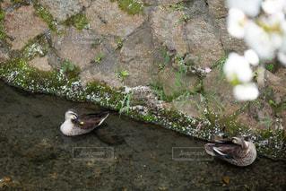 岩の上に座っている鳥の写真・画像素材[3156088]