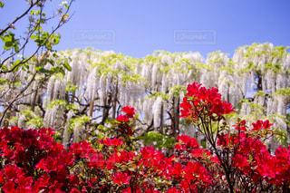 植物の色とりどりの花の写真・画像素材[3161412]