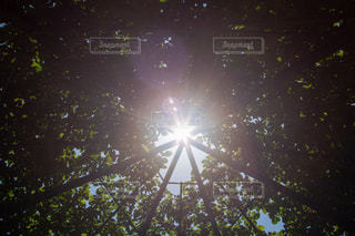 太陽の写真・画像素材[3162337]