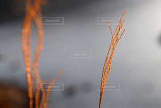 秋の葉の写真・画像素材[3171628]