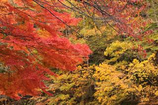 森の中の木の写真・画像素材[3171633]