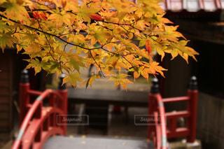 木に花の写真・画像素材[3171635]