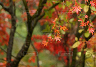 木のクローズアップの写真・画像素材[3171659]