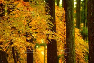 森の中の木の写真・画像素材[3171664]