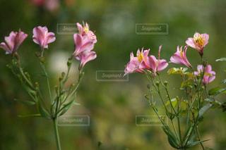 紫色の花の写真・画像素材[3171668]
