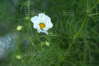花のクローズアップの写真・画像素材[3171676]