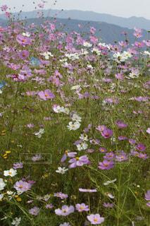 花のクローズアップの写真・画像素材[3171680]