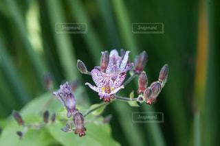花のクローズアップの写真・画像素材[3171682]