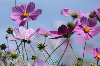 紫色の花の写真・画像素材[3171683]
