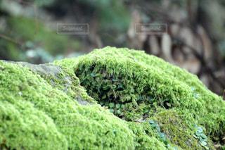 岩のクローズアップの写真・画像素材[3171691]