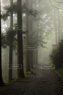 森の中の木の写真・画像素材[3171694]