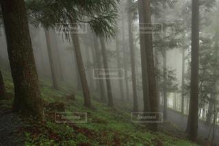 森の中の木の写真・画像素材[3171695]