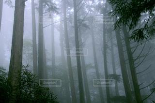 木の写真・画像素材[3171696]