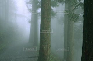 森の中の木の写真・画像素材[3171699]