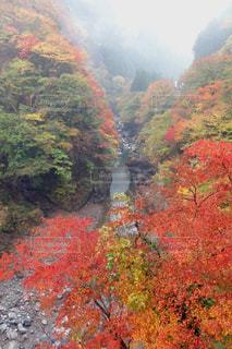 背景に山のある木の写真・画像素材[3171706]