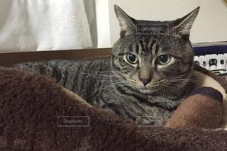 横になってカメラを見ている猫の写真・画像素材[3189225]