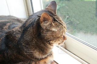 窓の前に座っている猫の写真・画像素材[3189227]