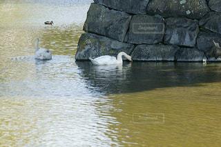 水の体の隣の岩の上に座っている鳥の写真・画像素材[3202881]