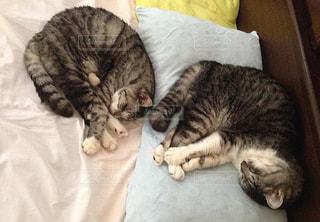 ベッドに横たわる猫の写真・画像素材[3227339]