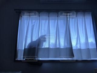 青と白カーテンと猫の写真・画像素材[3229185]